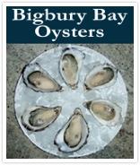 Bigbury Bay Oysers